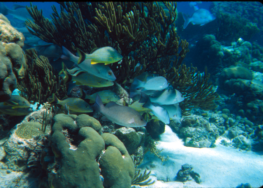 Coral reef with fishes