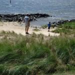 living shoreline fact sheet