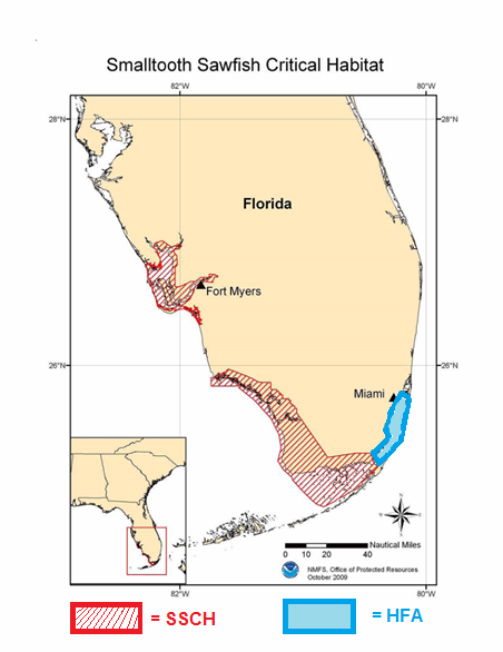 The map's red striped area marks official Smalltooth Sawfish Critical Habitat, and the unprotected blue area indicates the NOAA Habitat Focus Area of Biscayne Bay. (NOAA)
