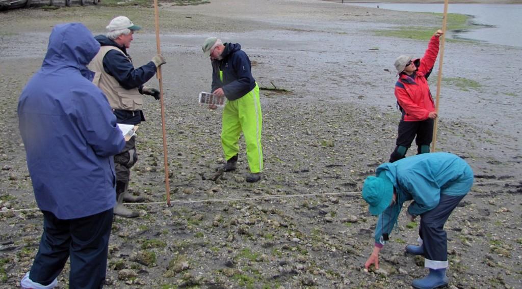 Beach Watchers monitoring2