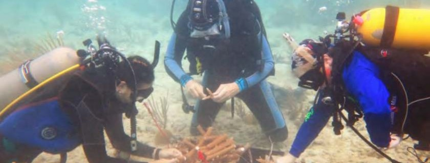 Land-Sea Strategy Revives Puerto Rico's Corals
