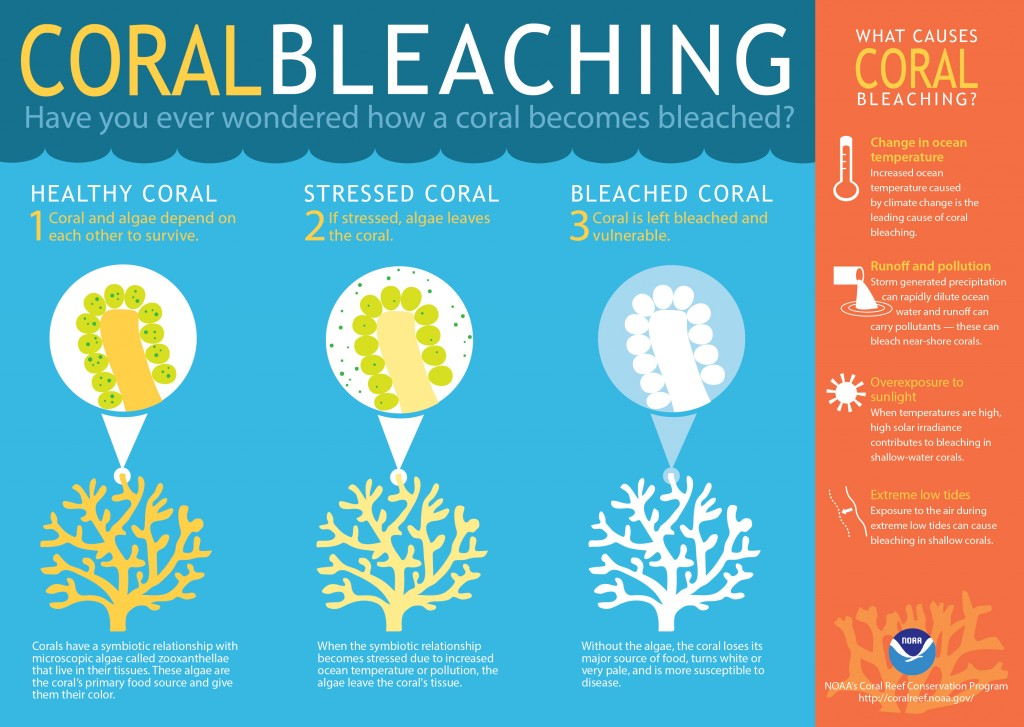 Cartoon describing the coral bleaching process. http://flowergarden.noaa.gov/education/bleaching.html