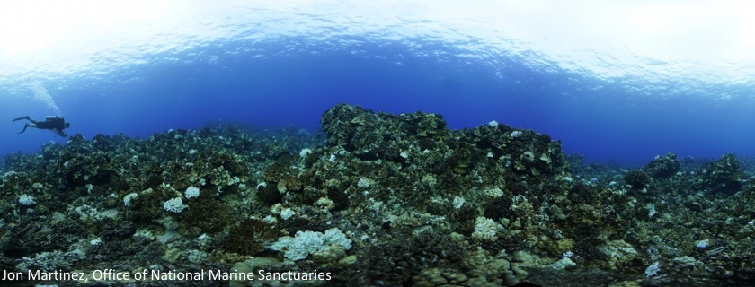 Relax, Don't Stress: Health and Potential of West Hawaiʻi Coral Reefs to Recover