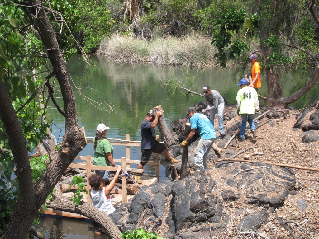 Volunteers remove invasive plants from a fish pond in West Hawaii Habitat Focus Area.