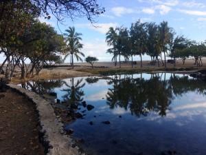 Anchialine pool at Kaʿelehuluhulu in West Hawaiʻi