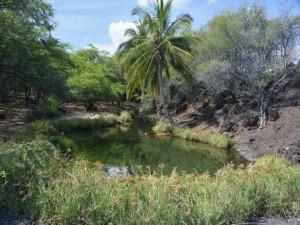 Anchialine pool at Waiaʿelepī in West Hawaiʻi