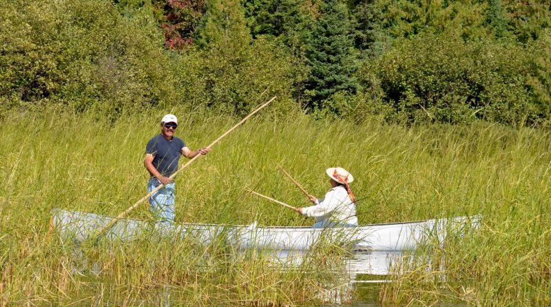 Community members canoe through an area of wild rice in the St. Louis River Estuary.